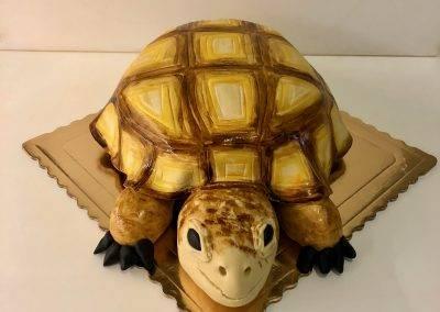 tort zółw